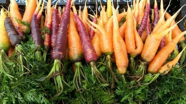 Blue_Gate_Farm_Carrots