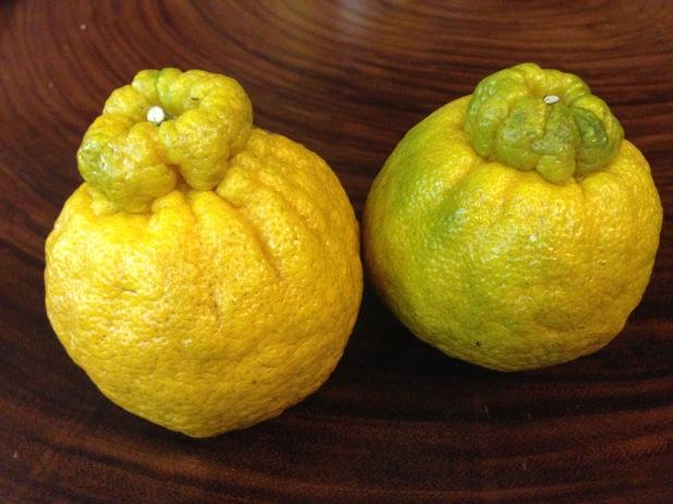 Shiranuhi_Oranges