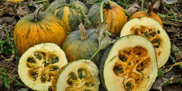 styrian-pumpkin-halves